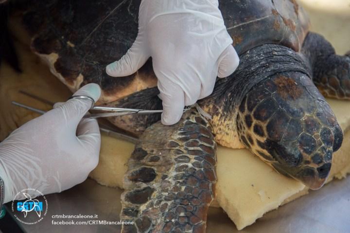 Brancaleone rc al centro per le tartarughe vetri e for Vasche per tartarughe marine